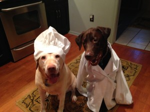 Taste Testers for Quality Control- Natural Dog Treats in Maryland
