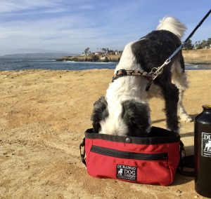 Travel Bag & Water Bowl & for Dogs